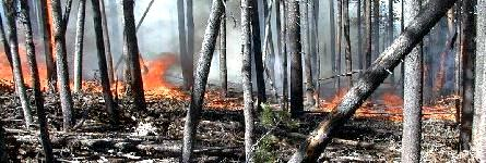 wildfire01.jpg (28139 bytes)